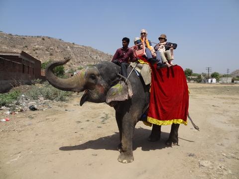 ジャイプールで象体験